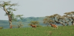 Galloping Hartebeest Family