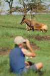 Old Legs Watches Hartebeest